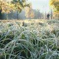 На Житомирщині скоро очікуются заморозки