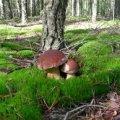 Знову отруєння грибами на Житомирщині