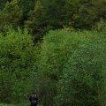 Житомирські рятувальники та лісники вивели жінку, яка блукала в урочищі Вовчі Осторови