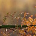 Сьогодні в Україні очікують дощі та незначне похолодання