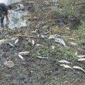 За одну ніч в ставку на Житомирщині потруїли усю рибу - рибалки звинувачують орендаря