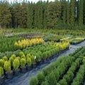 На Житомирщині працює 31 пункт з продажу саджанців дерев