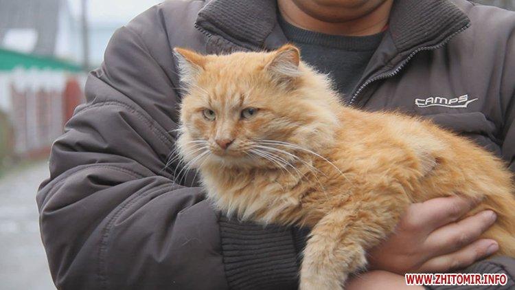 У Житомирі чоловік жорстоко вбив кота просто посеред вулиці, справою займається міліція
