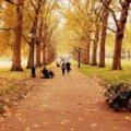 Сьогодні на українців чекає прохолодний осінній день