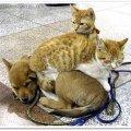 Собаки, які тремтять від одного лише погляду на кота. ВІДЕО