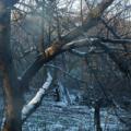 Тиждень перед Новим роком в Україні буде теплим та сухим
