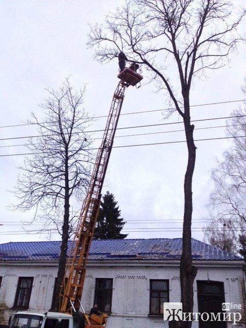 Сьогодні у Житомирі зеленбудівці обрізали дерева. ФОТО