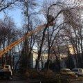 В житомирському центральному парку продовжують знищувати дерева. ФОТО