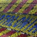 Наступним суперником збірної України може стати Каталонія