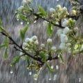 Українцям на травневі свята обіцяють теплі дощі, а потім різке похолодання