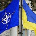 У Меркель вынесли вердикт: Украине не видать НАТО