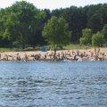 В Житомирі офіційно визначили місця для масового купання та відпочинку
