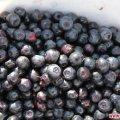В Житомирській області продавці чорниці скаржаться на неврожай ягід, тлю і «браконьєрів» ФОТО