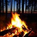 Житомирян закликають бути обережними під час відпочинку в лісі