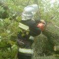 Негода повалила дерева в Червонармійському районі Житомирської області