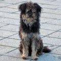 В Житомире до сих пор не начали обустройство приюта для бездомных животных