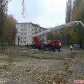 В Житомире на Полевой так срезали деревья, что оставили дома без связи и интернета