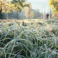 Найближчими днями в Житомир прийдуть морози