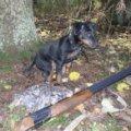 Мисливці Житомирської області можуть готувати рушниці: 1 листопада - відкриття сезону полювання