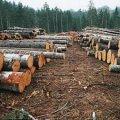 На Житомирщині лісгоспи за незаконну порубку дерев сплатять штраф