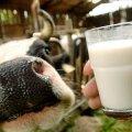 Житомирське масло користується попитом у Молдові, Азербайджані та Вірменії