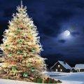 У новорічну ніч біля головної ялинки Житомира відбудеться дійство «На щастя, на долю, на рік Новий»