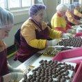 В Коростені ширяться чутки про відкриття філії шоколадної фабрики