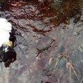 Жители села под Житомиром жалуются на «кровяные» ручьи на улице, текущие от местной скотобойни