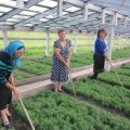 На Житомирщині в минулому році посадили 700 тисяч новорічних ялин