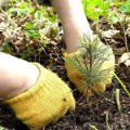 В Житомирской области высадят более 7000 га леса