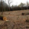 У Лугинському районі браконьєри вкрали лісу на 150 тисяч гривень