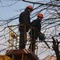 В Житомирі відходами від кронування дерев опалюють теплиці.