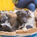 На Житньому ринку можна купити цуценя чи кошеня за 50-100 гривень. ФОТО