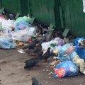 Хто перетворює центр Житомира на смітник? ФОТО