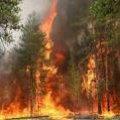 На Житомирщині спостерігається найвищий рівень пожежної небезпеки