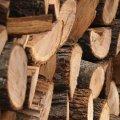 Порошенко запретил экспорт леса в необработанном виде на 10 лет