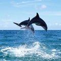 Житомирська туристична фірма запрошує відпочити на морі