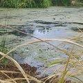 Риба в річці Хомора загинула через спеку
