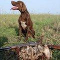 В суботу на Житомирщині відкриють сезон полювання на пернату дичину