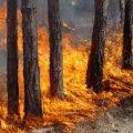 Житомирські лісівники працюють в надзвичайному режимі