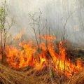 Житомирянам нагадують про покарання за підпал «сухостою» та лісу