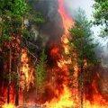 На Житомирщині лісова пожежа пошкодила майже 700 заповідних дерев
