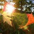 Завтра на Житомирщині - осіннє сонцестояння
