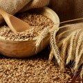 В області зібрано 75 % зернових та зернобобових культур