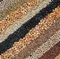 На Житомирщині з'явиться насіннєвий завод потужністю 6 тис. тонн