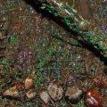 Вночі в Житомирській області затримали молодиків, які видобували бурштин