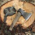 В Житомирской области двое мужчин на внедорожнике срубили 5 здоровых дубов