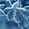 Погода в Житомире и Житомирской области на выходные, 5 и 6 декабря