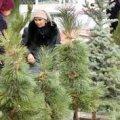 Губернатор Житомирської області підписав розпорядження про точки продажу новорічних ялинок