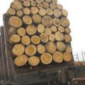 В Романівському районі виявили автомобіль завантажений деревиною без документів